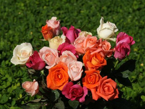 lang hoa 10