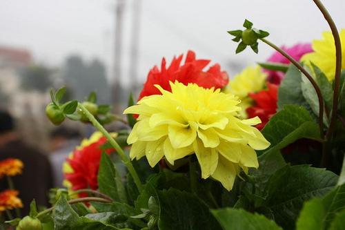 lang hoa 3