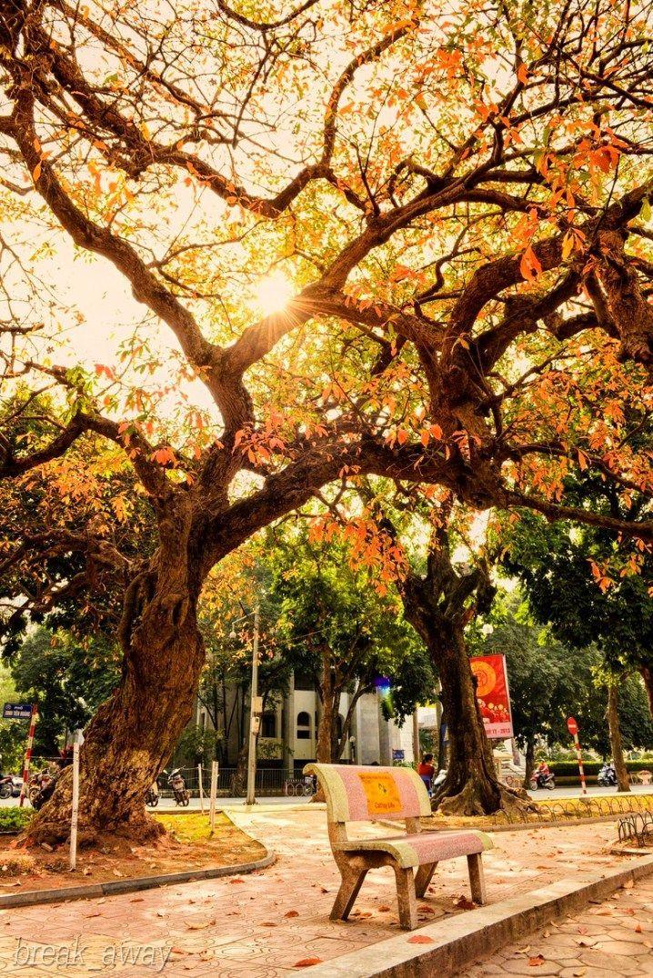 hanoi autumn (4)