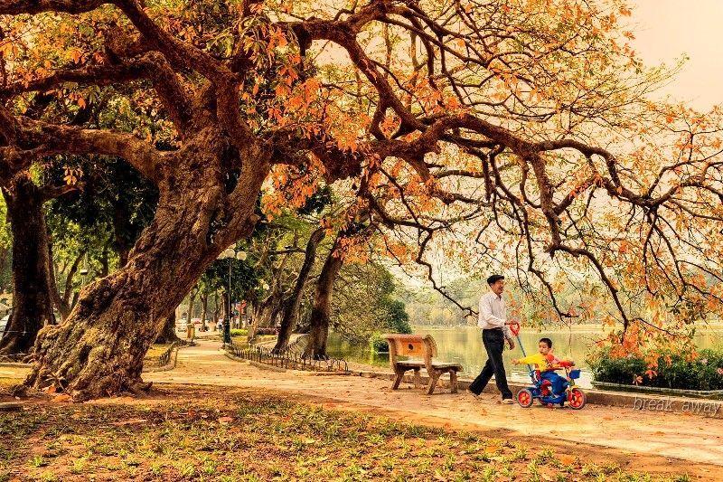 hanoi autumn (9)