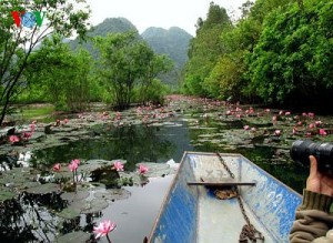 Hanoi Travel- Water lily in Bloom at Yen Stream