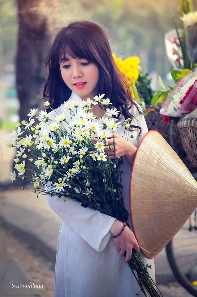 ox-eye-daisy-hanoi-8