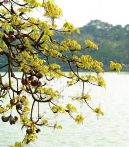Poetic Hoan Kiem Lake In The Season Of Slit Gong- Shaped Flowers