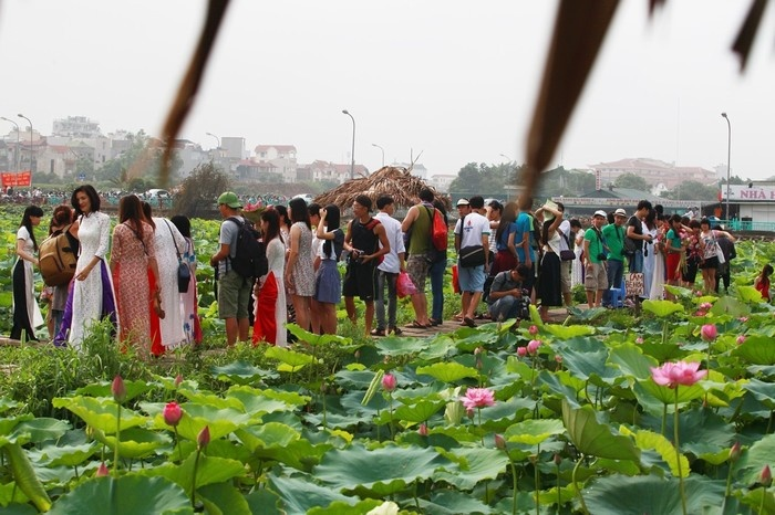 West Lake Lotus Flowers  (10)
