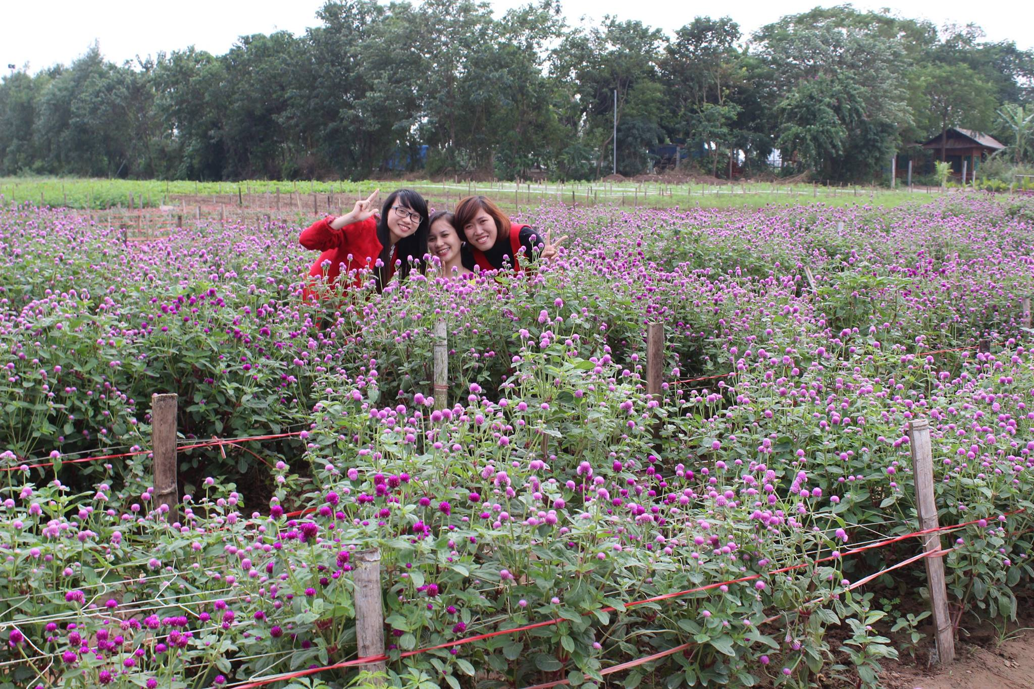 Flower Red River Ground Attracts A Lot Of Visitors  (1)