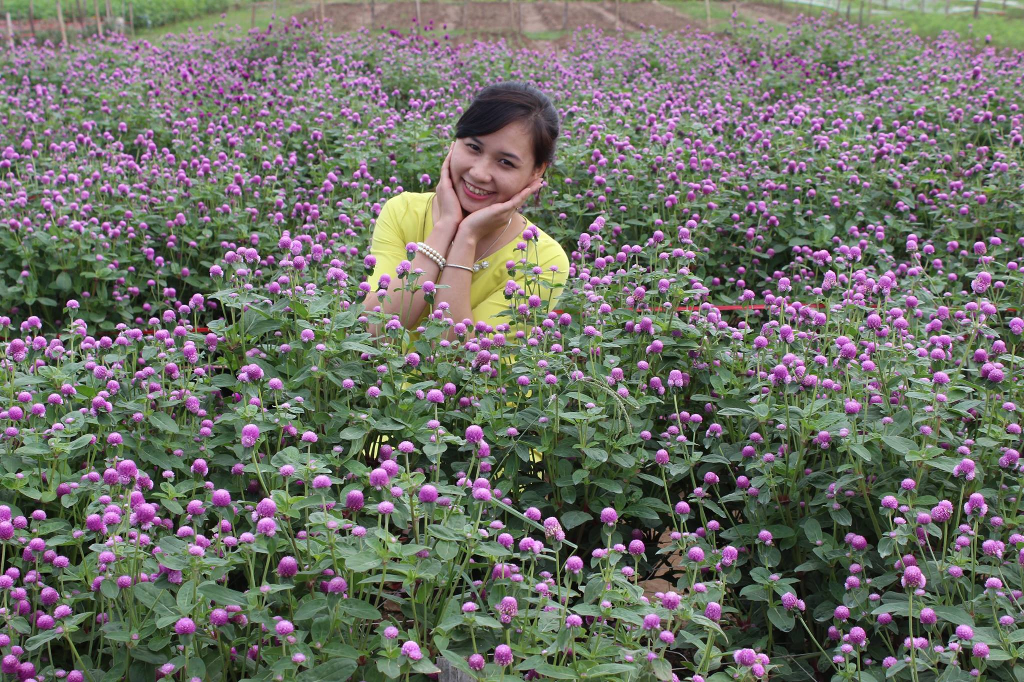 Flower Red River Ground Attracts A Lot Of Visitors  (2)