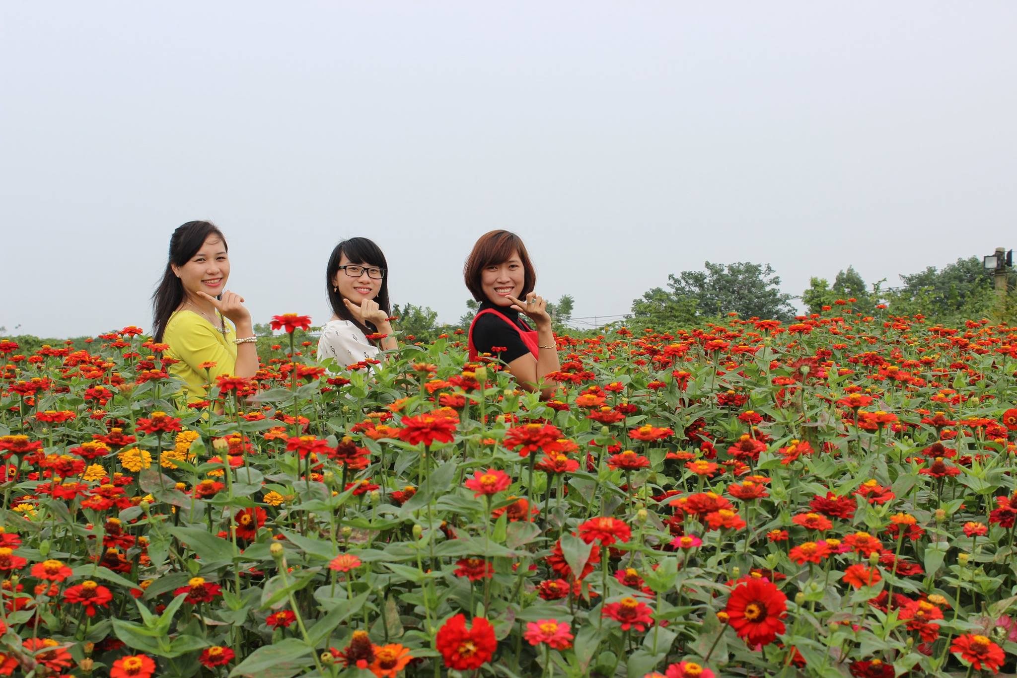 Flower Red River Ground Attracts A Lot Of Visitors  (3)