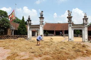 Yellow Straw Spreading Across Duong Lam Roads