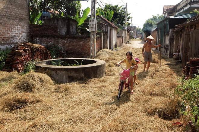 Yellow Straw Spreading Across Duong Lam Roads (5)