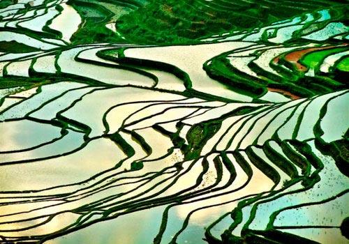 the flooding season of terraced field