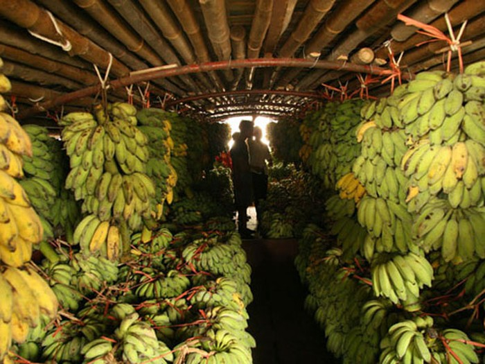 Tons of banana is sold every day