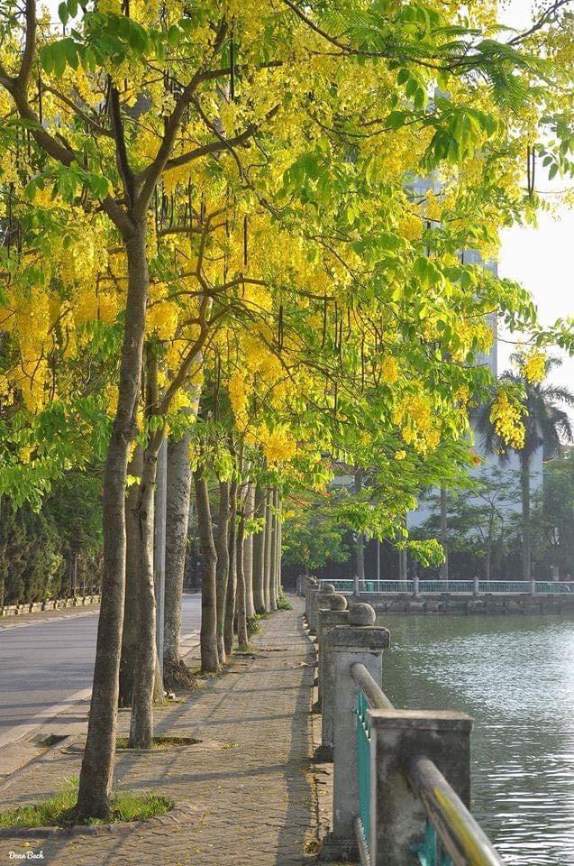 Muong Hoang Yen runs along West lake