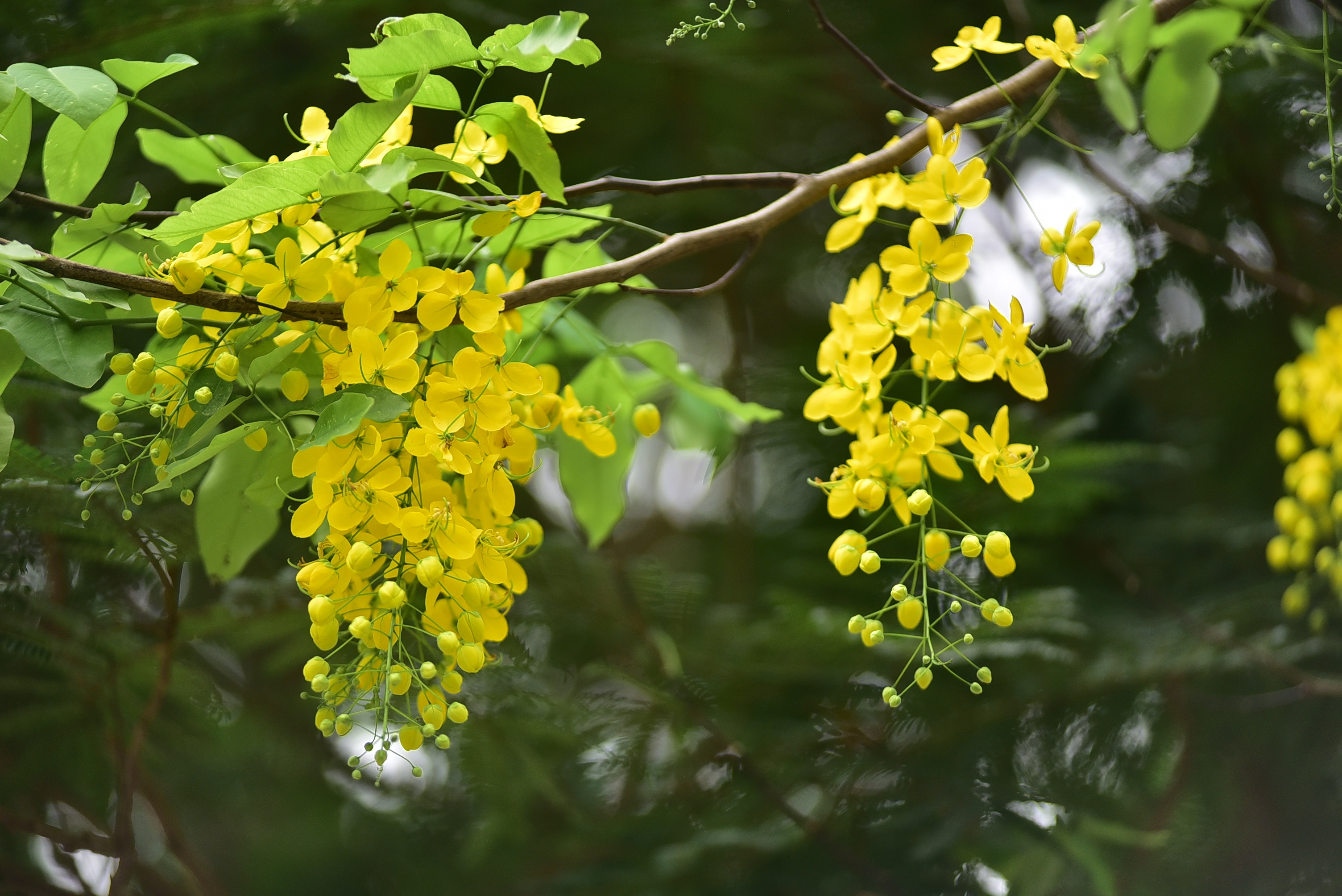 Bunches of flowers hanging down