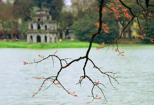 Spring in Ha Noi